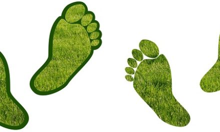 Watch Where You Step: Understanding Your Carbon Footprint