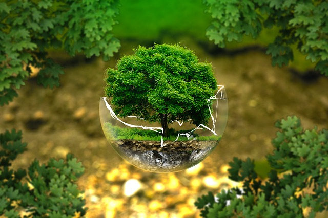 Image result for facts about earth day 2020