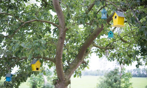 Features of a Good Birdhouse – Give a Bird a Home!